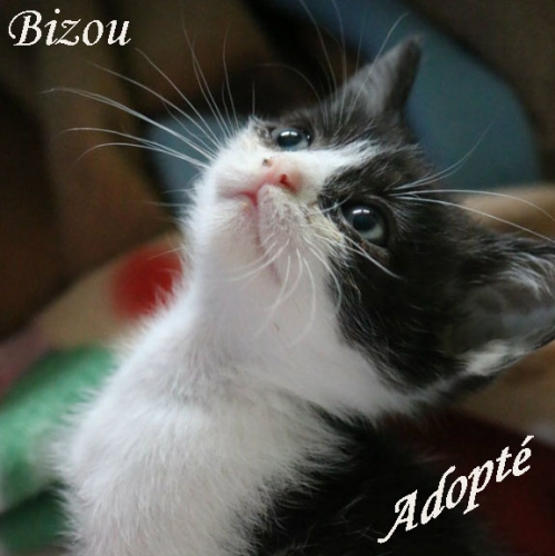 Bizou Adopté.jpg