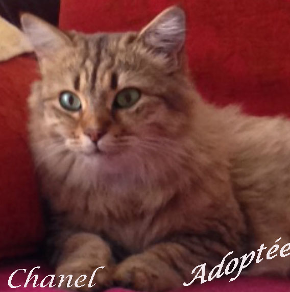 Chanel adoptée copie.jpg