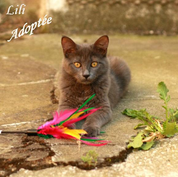 Lili (2).jpg