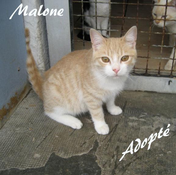 Malone pa.jpg