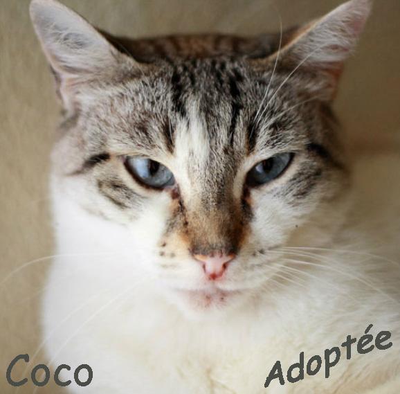 Coco adoptée.jpg