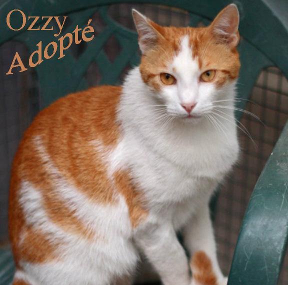 Ozzy Adopté.jpg