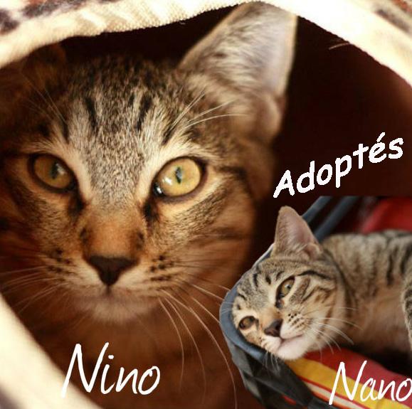 Nino et Nano pa.jpg