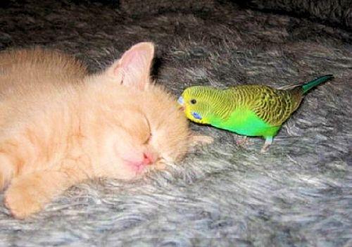 Dors mon chaton, je veilles sur toi...