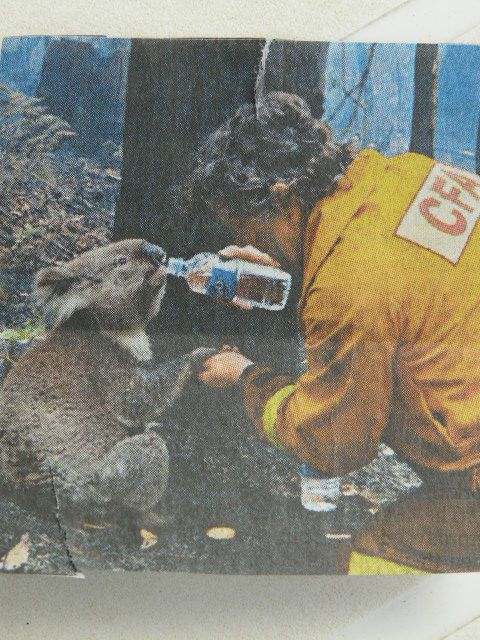 Photo du Daily telegraph qui a fait le tour de l`Australie pendant les incendies