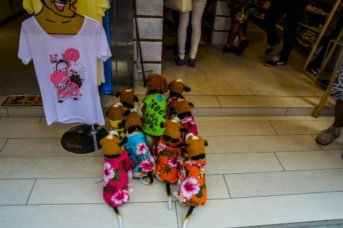 ça tombe bien moi qui cherchait une chemise hawaienne pour mon chien !!.JPG