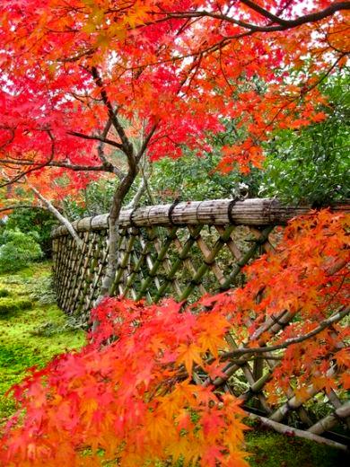 Koetsu-ji-fence_xm.jpg