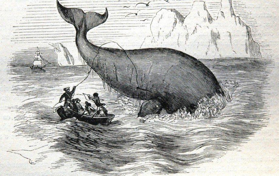 Baleine. Chasse au XIXe siècle.jpg