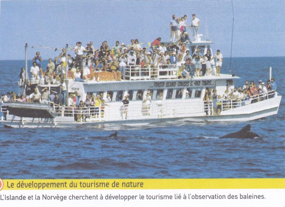 Observation baleines.jpg