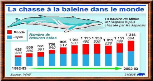 Baleine. Chasse 1992-2002 (graphique).jpg