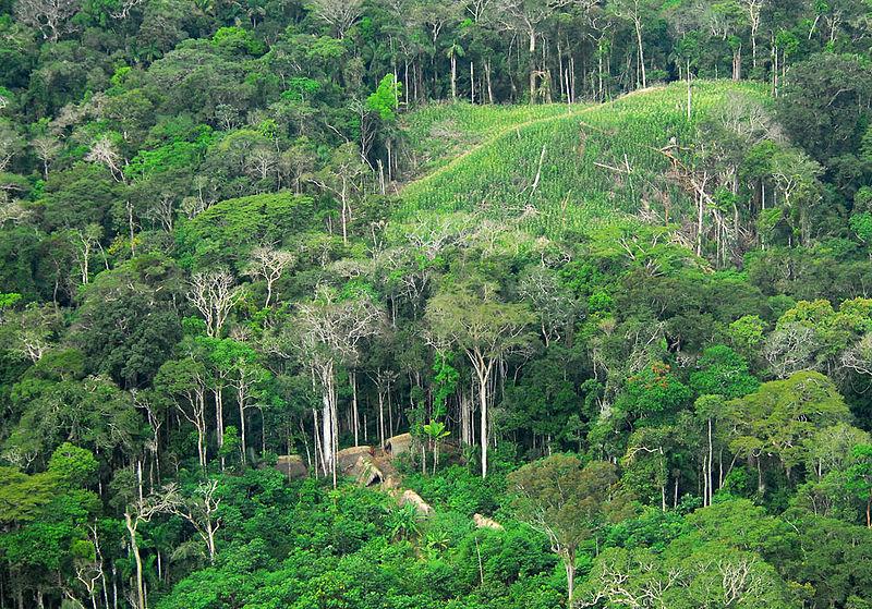Climat. Forêt équatoriale..jpg