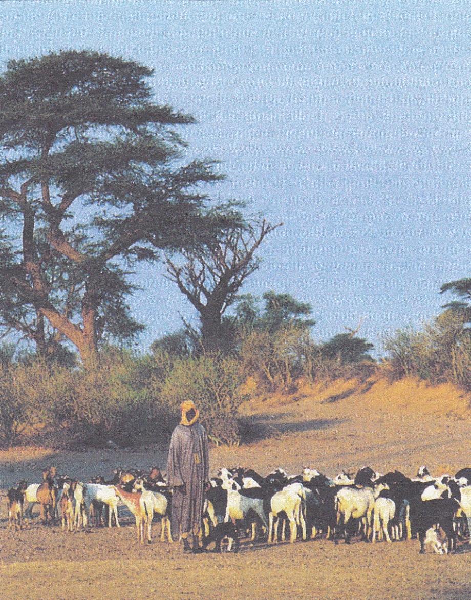 Sénégal. Pasteur région de Cayor.jpg