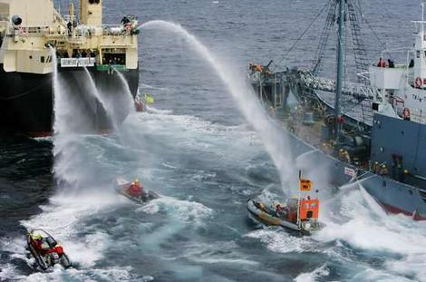 Greenpeace contre baleiniers japonais.jpg