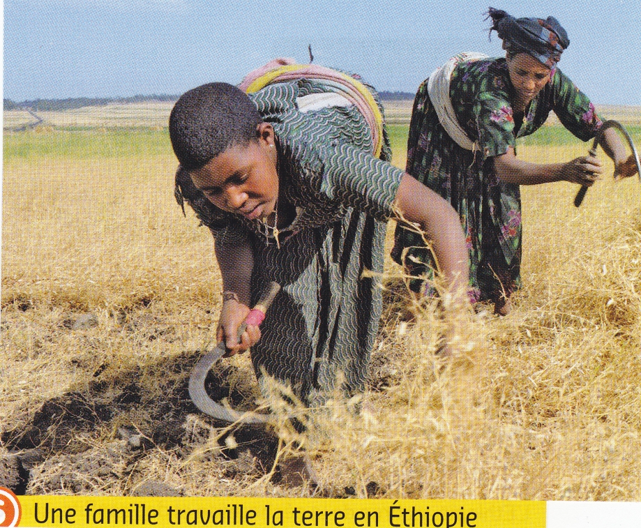 Ethiopie. Agriculture.jpg