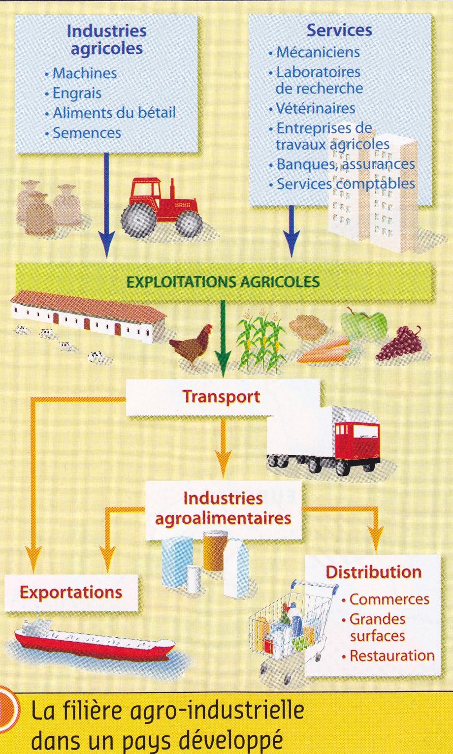 France. Filière agro-industrielle (schéma).jpg