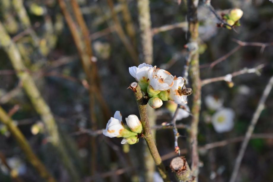 Magnolia 024.JPG