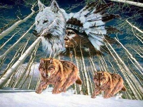 INDIEN loups