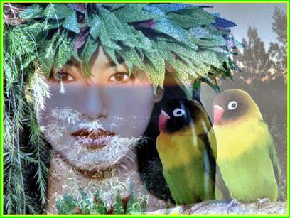TAHITIENNE oiseaux