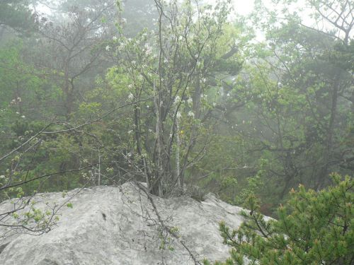 Un arbre qui a poussé sur le rocher !