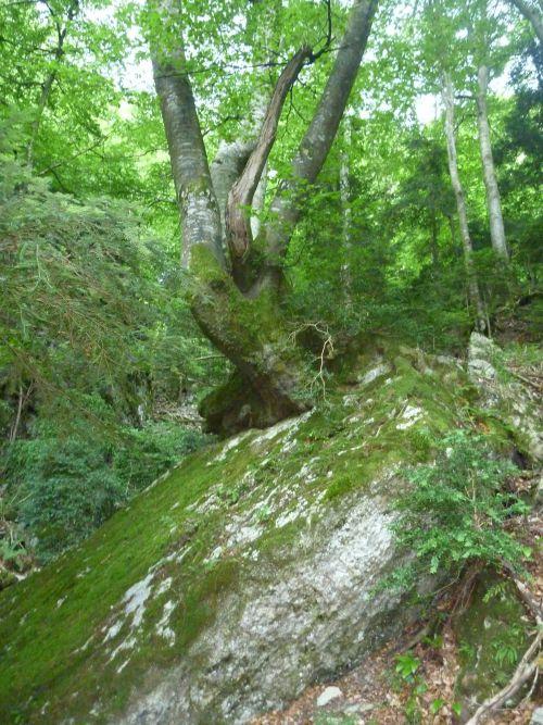 et toujours de magnifiques arbres