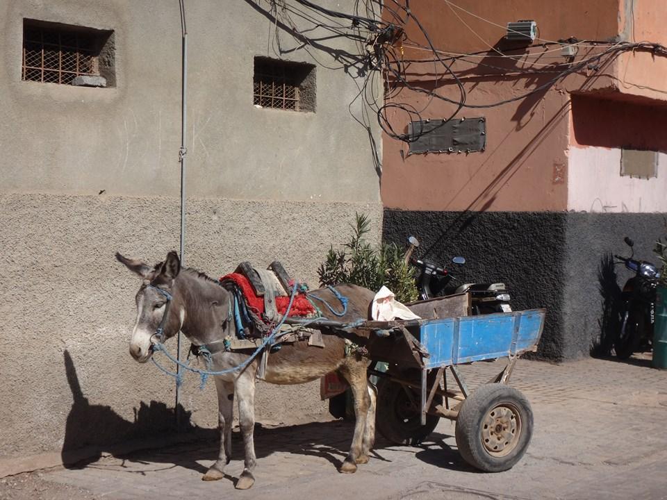 Maroc Daniel 2019 087 (Copier).JPG