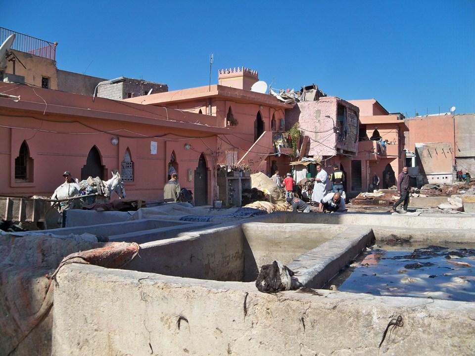 Maroc 2019 066 (Copier).JPG