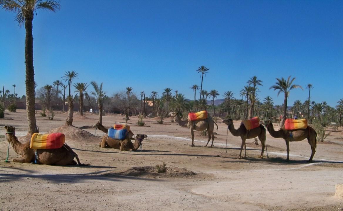 Maroc 2019 397+ (Copier).jpg