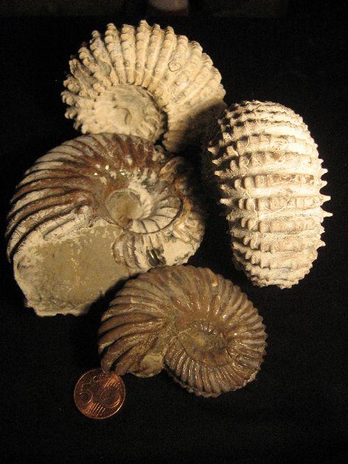 ammonites  gastero etc    tititi blog4ever com  blog
