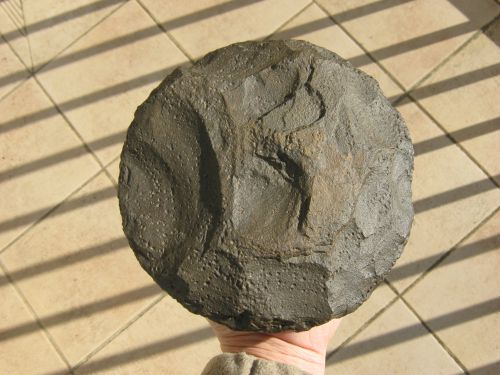 Trouvé par mon ami Odile en Mauritanie ,diamètre 17 cm ,epaisseur 6cm ?????????