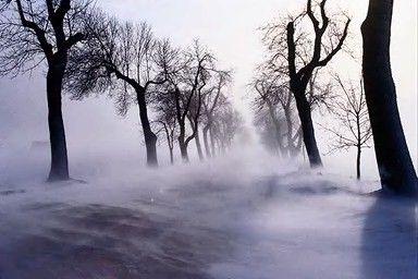 troncs à travers la neige