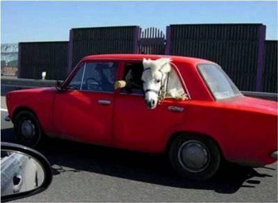 poney_voiture.jpg