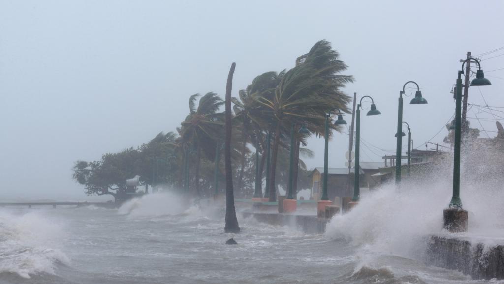 irma_ouragan_palmiers_porto_rico_0.jpg