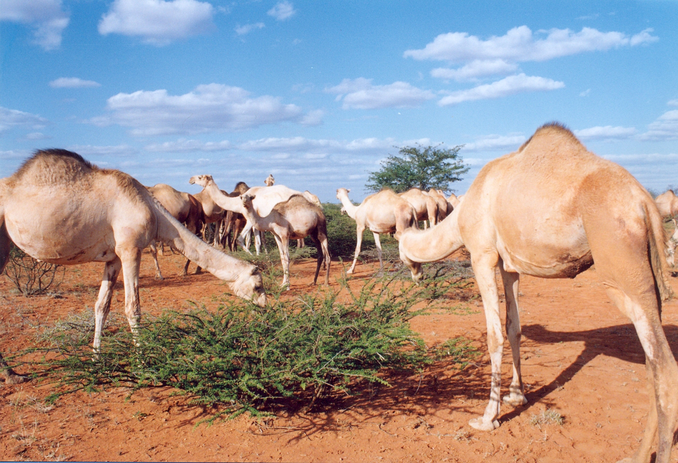 Somalie Plat de résistance.jpg