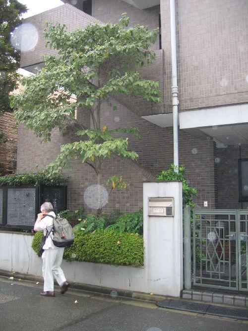 Maison du Doshu à TOKYO