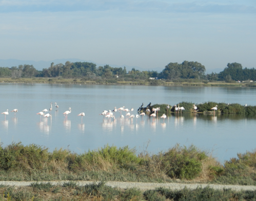 flament rose aigues mortes.png