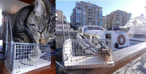 Ti'mouss et une souris au Port Ariane