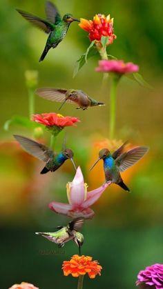 chant d'oiseaux butinant de jolies fleurs.