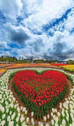 Un cœur de fleurs pour vous tous.