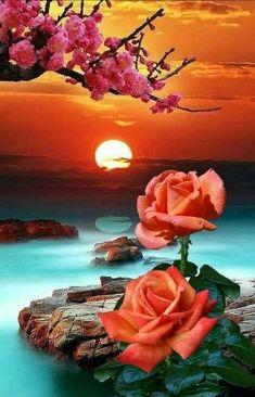 Des roses pour vous dire Bonsoir