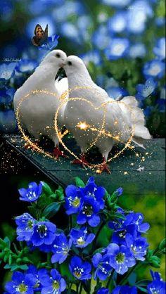 Que ce couple de colombes t'apporte la joie.