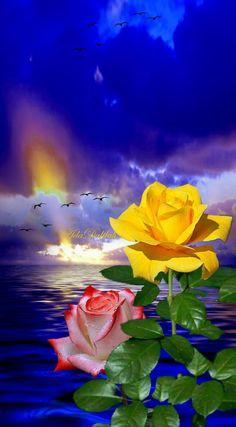 Des roses pour vous.
