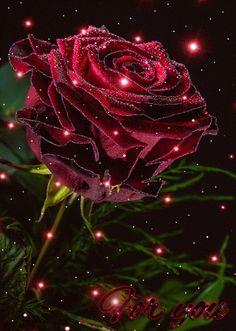 Rose lumineuse pour dire que l'on aime.