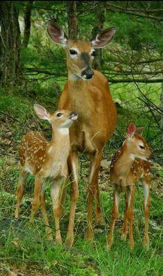 Jolie cette petite famille.