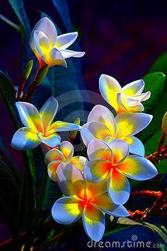 Luminosité des fleurs.