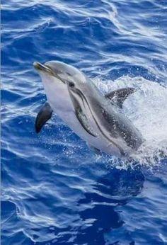 Quelle joie de voir ce dauphin être heureux.