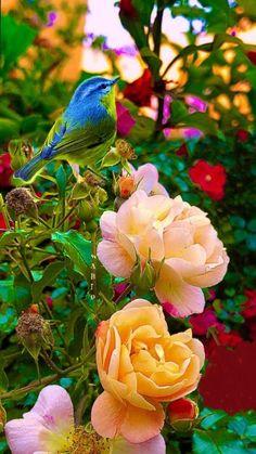 des roses pour embaumer votre coeur.