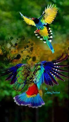 bels oiseaux.