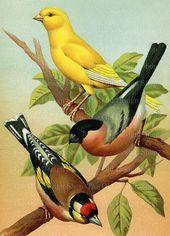 Le chant des oiseaux égaient notre âme