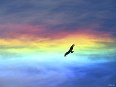 Un aigle volant dans un beau ciel.