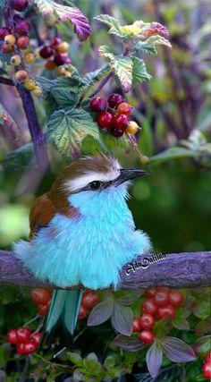 Quel bel oiseau !